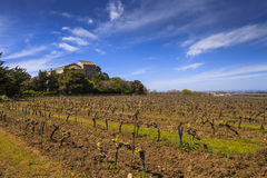 View of the grape lands Royalty Free Stock Photos