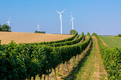 View on the grape plantation Royalty Free Stock Images