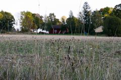 View with grass and field Stock Images