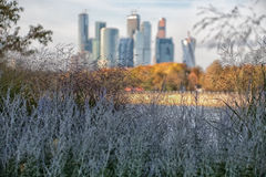 View through a grass. Of high-rise buildings Royalty Free Stock Photo