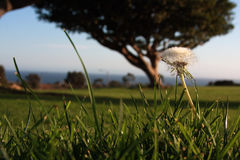 View at the grass level -groundlevel Stock Images