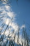 View from the grass to the sky abstract background Stock Photo