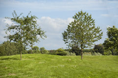 View of grass, trees and bushes Royalty Free Stock Photos