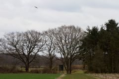 A view on a grassland and the wood with a bird flying at the sky. Photographed during a walk in the nature of north germany with wide angle lens stock photo