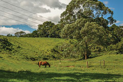 View of grassy fields with a horse grazing near the town of Joanópolis. Royalty Free Stock Photo