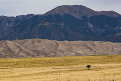 View on Great Sand Dunes with Lonely Tree Royalty Free Stock Photo