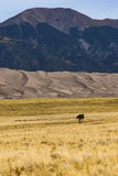 View on Great Sand Dunes with Lonely Tree Royalty Free Stock Photos