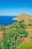 View of Greek sea bay with grass and bushes, Kos Royalty Free Stock Images