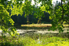 View through the green branches of the forest on lake island Stock Photo