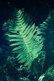 View on green Fern leaves under sunlight in the woods. Ferns in the morning light. Plants in the Forest. Growing Ferns Stock Photos