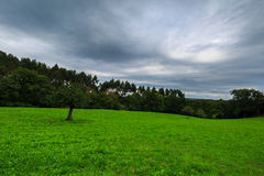View of the green fields of Laukiz, Basque country Stock Photography