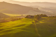 View of green fields at sunset in Tuscany Stock Photos