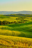 View of green fields at sunset in Tuscany Royalty Free Stock Photo