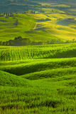 View of green fields at sunset in Tuscany Stock Images