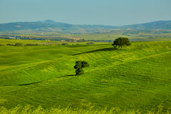 View of green fields at sunset in Tuscany Royalty Free Stock Photos