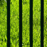 View on a green grass Royalty Free Stock Photo