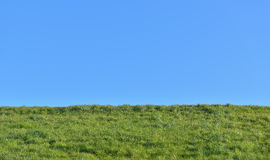View of green grass field from the ground Stock Photography