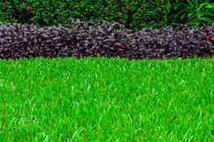 View of Green Grass. Fream Royalty Free Stock Photography