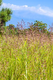 View of green grass on meadow and Etna mount Royalty Free Stock Photos
