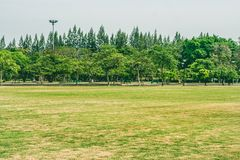 View of green grass meadow field in public park with green trees in the background. stock images