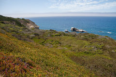 View on green grass and the sea, Highway 1 Stock Photography