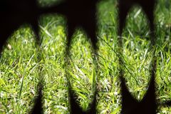 View of green grass stock image