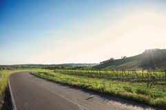 View of green hills and vineyards near a road with sunshine in the Tuscan countryside. stock photography