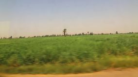 View of green lands from train. View of country side from train Aswan Egypt Africa stock footage