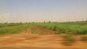 View of green lands from train. View of country side from train Aswan Egypt Africa stock video footage