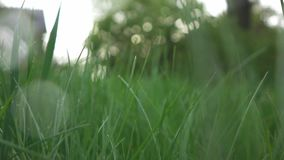 View on green lawn on a rainy evening, slow motion stock footage