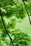 View of the green leaves Royalty Free Stock Image