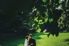 A view from green leaves on a kissing wedding couple.  Royalty Free Stock Photo