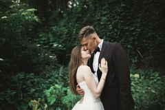 View from green leaves on a kissing wedding couple Stock Images