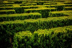 View of green maze. In the garden Stock Photos