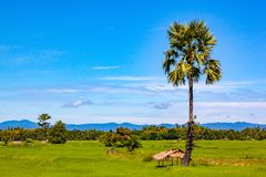 View of green paddy field Royalty Free Stock Images