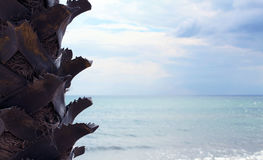 View at green palm branch and sea. Palm left. close up royalty free stock images
