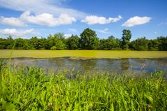 River Bosut in Vinkovci. A view of the green river Bosut covered with algal blooms in Vinkovci, Croatia Stock Image