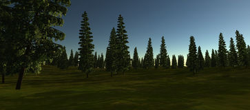 View of the green spruce in the summer. Night time Royalty Free Stock Photography