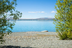 View through green trees across stony shore of Lake Pukaki. Lake Pukaki, Canterbury, South Island NZ Stock Photo