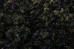 View of green trees, background, splash stock photo