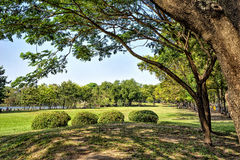 View of green trees in the city park Royalty Free Stock Photography