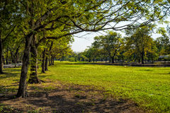 View of green trees in the city park Stock Images