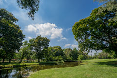 View of green trees in the city park Stock Image