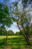 View of green trees in the city park Royalty Free Stock Images