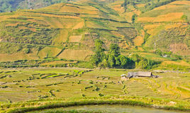View of green valley rice crops Royalty Free Stock Image