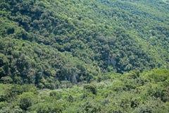 VEGETATION COVERING ROCK CLIFFS IN ORIBI GORGE. View of green vegetation on side of Oribi Gorge canyon in Kwazulu Natal Royalty Free Stock Photography