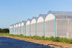 View for greenhouse with blue sky Stock Photography