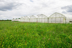 View of greenhouses in the countryside Royalty Free Stock Images