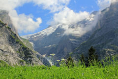 View at Grindelwald glacier with snow in Switzerland. View at Upper Grindelwald glacier in Berner Oberland Switzerland. With grass and flowers at the foreground Stock Photo