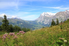 View at the Grindelwald valley with mountains in Switzerland. View at the Grindelwald valley with the mountains of Berner Oberland, Switzerland. Mountain Stock Photos
